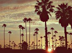 Beach. Palm trees. Sunsets.