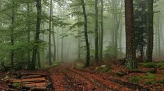 Foggy Forest Wallpaper Wide #5Fv