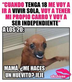 """Me das para unos chetos"" Funny Spanish Memes, Spanish Humor, Funny Photos, Funny Images, Mommy Humor, Mexican Memes, Good Ol, Funny Facts, Cat Memes"