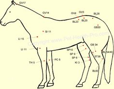 Acupuncture points for horses