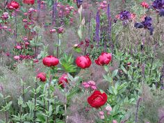 Chelsea Flower Show 2009 | Flickr - Photo Sharing!