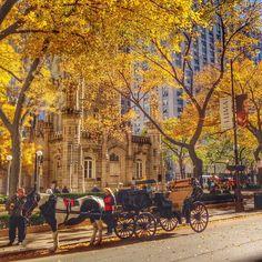 It's still fall in Chicago! Photo courtesy of nastasia706 on Instagram.