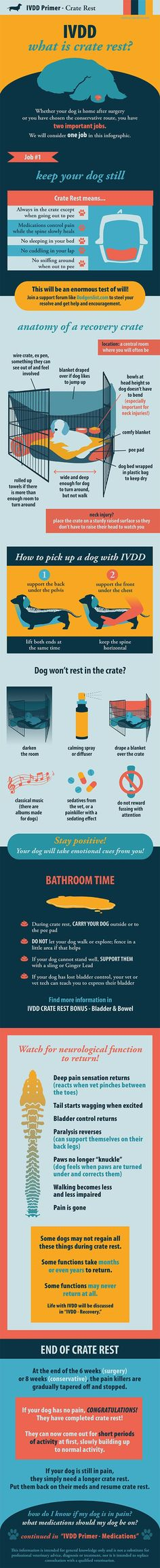 Content filed under the Dog Crates taxonomy. Service Dog Training, Service Dogs, Fu Dog, Vet Med, Dog Information, Vet Clinics, Weenie Dogs, Veterinary Medicine, Veterinary Technician