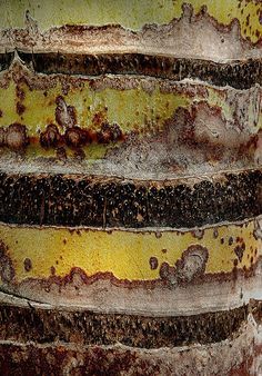 Palm Bark by Don Taylor