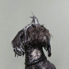 Funny Portraits of Wet Dogs by Sophie Gamand - My Modern Metropolis