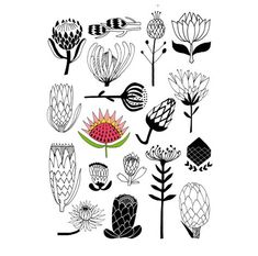 Thrilling Keep A Sketchbook Have Fun Ideas. Awe-Inspiring Keep A Sketchbook Have Fun Ideas. Protea Art, Protea Flower, Ceramic Painting, Fabric Painting, Botanical Illustration, Illustration Art, Laser Art, Wow Art, Botanical Prints