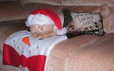 Meet Sunny getting ready for Christmas 2012! Groomed byhttp://www.aussiepetmobile.ca/northshore/