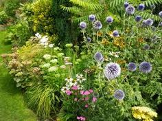 Image result for white echinops Garden, Plants, Image, Garten, Lawn And Garden, Gardens, Plant, Gardening, Outdoor