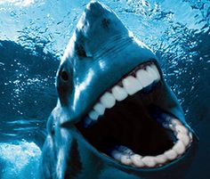 Shark With Human Teeth | WHATTHECOOL