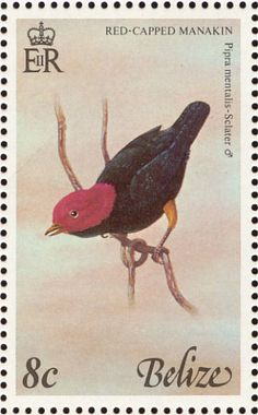 Red-capped Manakin stamps - mainly images - gallery format