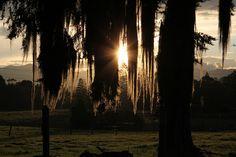sol occidental by Alejo, en Vespa, via Flickr Vespa, Traveling, Explore, Places, Colombia, Wasp, Viajes, Hornet, Travel