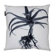 Aloe St Verde Scatter Cushion from Weylandts Cushions For Sale, Scatter Cushions, Throw Pillows, Weylandts, Lounge Suites, Different Styles, Aloe, Africa, Prints