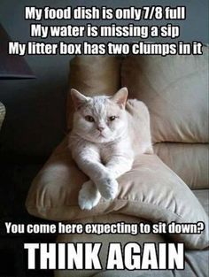 Top 30 Funny Animal Pictures and Jokes #images with captions