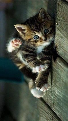 Pet cats baby kittens gatos 23 Ideas for 2019 Cute Fluffy Kittens, Kittens Cutest Baby, Cute Baby Cats, Kittens And Puppies, Cute Cats And Kittens, Cute Funny Animals, Cute Baby Animals, Adorable Kittens, Funny Cats