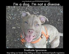 Eradicate Ignorance. I truly believe that Bully breeds are some of the most amazing, loyal and loving dogs in the world..That being said they are also a breed that needs love, training and a strong pack leader..