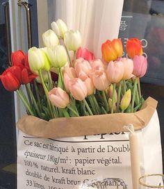 My Flower, Beautiful Flowers, Flower Aesthetic, Peach Aesthetic, Kpop Aesthetic, Wall Collage, Planting Flowers, Flower Arrangements, Bloom