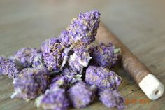 Purple weed #marijuana #ganja #dank ~ marijuanachecks.com ~ Like us on Facebook at http://www.facebook.com/legalizationchecks