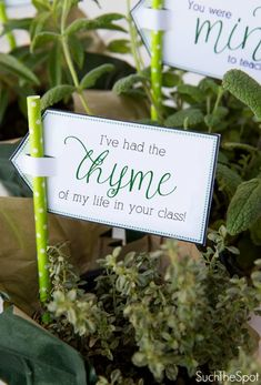 Herb teacher appreciation printables from such the spot like you