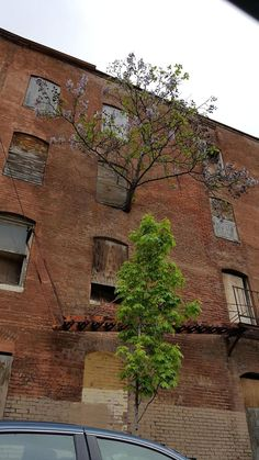 A Tree Grows From Third Floor Window