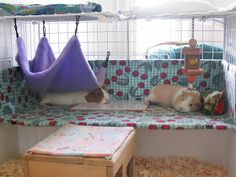 Buy The Right Size Guinea Pig Cage. Photo by maskarade Purchasing a guinea pig cage in a pet shop is unfortunately a good way to ensure that it is in fact too small for your pet's needs. Diy Guinea Pig Cage, Guinea Pig Hutch, Guinea Pig House, Pet Guinea Pigs, Guinea Pig Care, House Hippo, Hamsters, Pet Rodents, Chinchillas