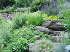steep slope landscape planting - traditional - landscape - boston - vdhdesign