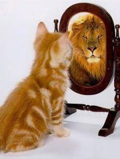 lion kitty orange cat fur cute mirror reflection
