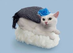 Cats Dressed as Sushi Rolls – Fubiz Media