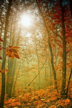 Forest by Merca Michael*