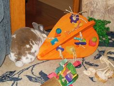 Crazy HUGE Carrot Rabbit Toy with   Bunny