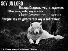 Soy un Lobo Tranquilamente, voy a soportar Silenciosamente, voy a sufrir Pacientemente, voy a esperar Porque soy un guerrero y voy a sobrevivir.