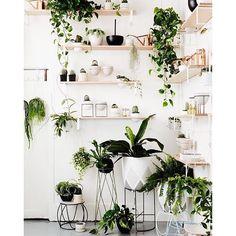 Add some plant life to your home!!! This fabulous display is via @ivymuse_melb  #interior #interiors #interiordesign #inspo #plants #kmartstyling #realestate #homedecor #interiorstyle #interiorstyling #interiordecor #interiorwarrior #interior4all #interior123 #interiorinspiration #interiorinspo #homesweethome #homedesign #homestyling #homemade #homewares #sharemystyle #instahome #urbanjunglebloggers #decor #decoração #deco #scandi #livingroom #inspo by sweetbliss_style…