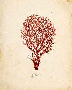 Vintage Sea Coral on Antique Ephemera Print 8x10 P126. $14.00, via Etsy.