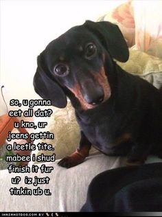 10 Dogs Pins to check out - themalonessbko@gmail.com - Gmail