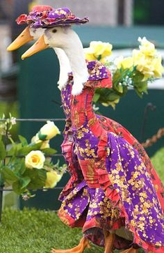 ♥ ~ ♥ Ducks and Duck Houses ♥ ~ ♥ Haute Couture Geese! This reminds me of the Beatrix Potter books. Farm Animals, Funny Animals, Cute Animals, Pet Costumes, Halloween Costumes, Runner Ducks, Raising Ducks, Feather Fashion, Pet Fashion