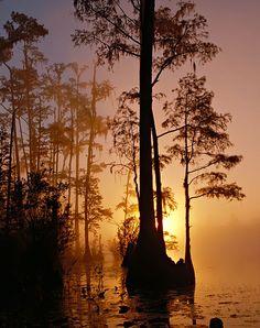 Okefenokee Swamp,