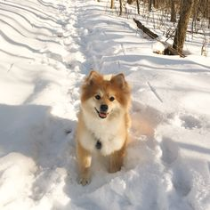 My snow dog Bobby #dogpictures #dogs #aww #cuteanimals #dogsoftwitter #dog #cute