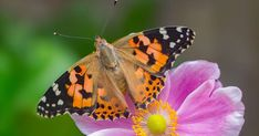 """Butterfly numbers have fallen to their lowest level in more than a decade, with campaigners saying it shows the """"perilous state of wildlife"""" in the UK."""