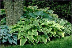 Hjälp mig att anlägga en lättskött trädgård från scratch!