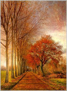 Autumn Line, Sermersheim, Alsace, France Beautiful World, Beautiful Places, Beautiful Pictures, Autumn Scenes, Fall Pictures, Autumn Day, Autumn Leaves, Winter, Beautiful Landscapes