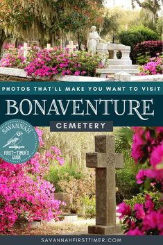 Springtime in Bonaventure is a magical sight, with seas of hot pink azaleas in bloom as far as the eye can see! Get the scoop from a local about the best Bonaventure Cemetery Tours, where to spot the best azaleas in Savannah, and some of the best things to do in Savannah during your visit.   savannahfirsttimer.com Usa Travel Guide, Travel Usa, Travel Guides, Travel Tips, North America Destinations, Us Travel Destinations, Bonaventure Cemetery, Usa Places To Visit, Canada Travel