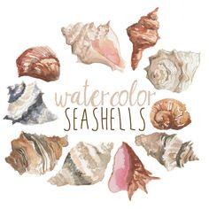 Watercolor Seashells Nautical Clip art by DigitalPressCreation