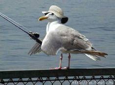 Funny Bird catching Fish #Cute