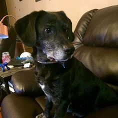 Rocko - Courtesy Listing's Web Page - Rose's Rescue, Dog adoption, Animal Rescue