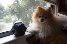 The Odin dog toy is part great design + a whole lot of fun! Stuff it with treats and watch your pup play the day away! #SheSpeaksBark #Pomeranian #TheOdin #UpDogToys #PetProductReview #DogToy