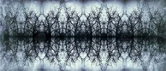 pattern made of blackthorn. #blackthorn #pattern #dark #fractal #design