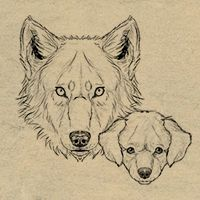 How to Draw Animals: Dogs and Wolves, and Their Anatomy (via vector.tutsplus.com)