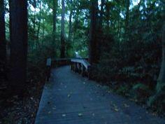 One of our favorite pathways at Washington Lake Park, NJ.