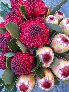Australian Native Flowers, Australian Plants, Unique Flowers, Amazing Flowers, Protea Plant, Protea Bouquet, Online Florist, Garden Trees, Flower Farm