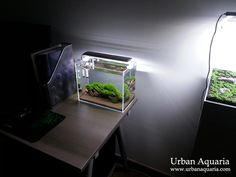 "This is my first nano tank... its actually just meant as a temporary tank to hold fishes and shrimps while my larger ""showcase"" tank was und..."