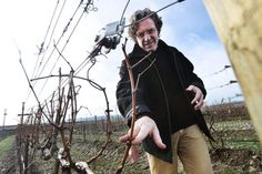 """Line up a thousand different Syrah wines from across the world and Steve Robertson is confident connoisseurs would be able to tell which come from The Rocks District of Milton-Freewater.""""It's because the wines here are so distinctive,"""" Robertson said. """"There's a lo"""